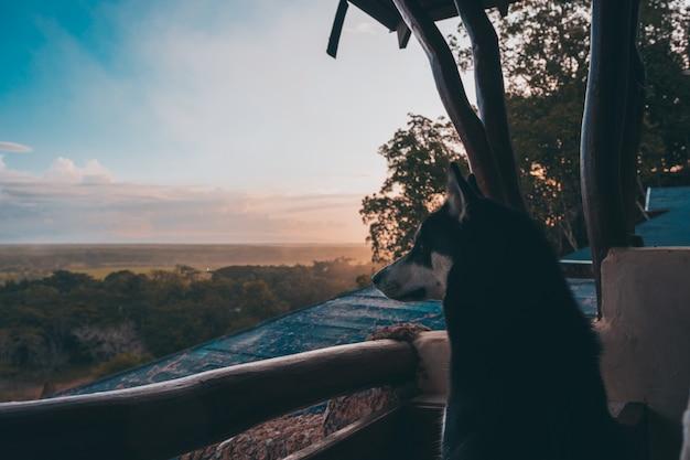 ハスキーは自然の中で日の出を見る