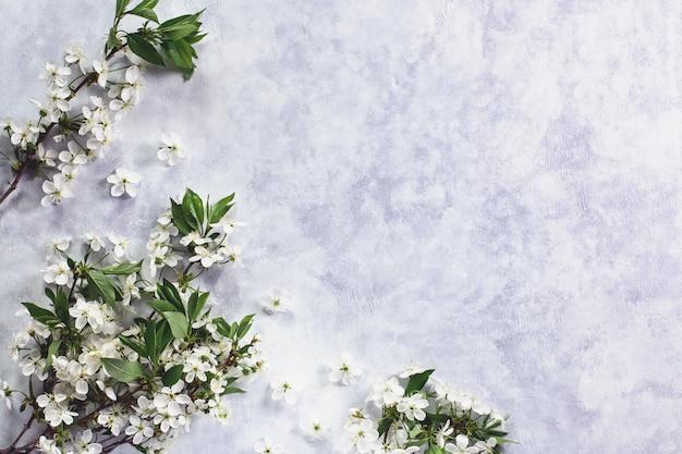 Весенняя вишня. вишневые цветы плоские на пастельных фоне. открытка с белыми цветами, копией пространства, вид сверху