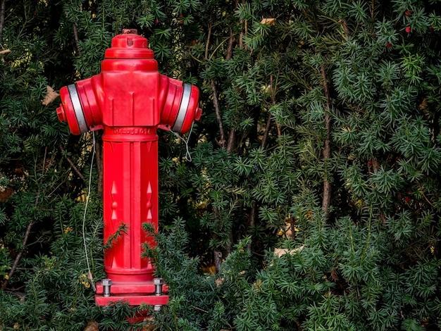 芝生の真ん中に赤い火柱