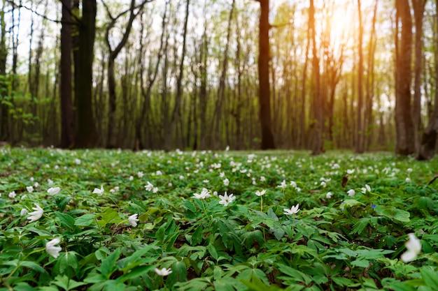 春の森の花草原