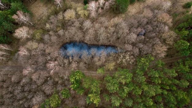 鳥瞰図からの森の湖