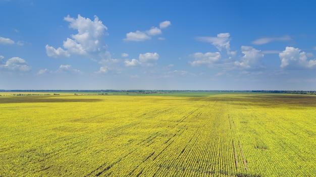 ひまわり畑の鳥瞰図
