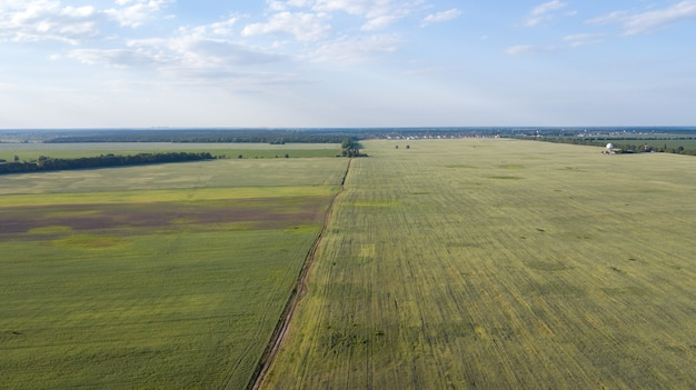 Сельскохозяйственные угодья сверху - воздушное изображение пышной зеленой поля