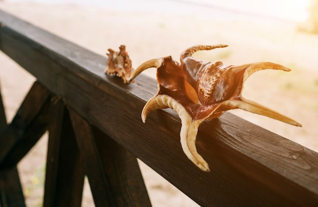 Две ракушки на стене пляжа и моря. они стоят на деревянной части.
