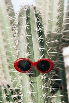 明るい背景にサングラスのサボテン