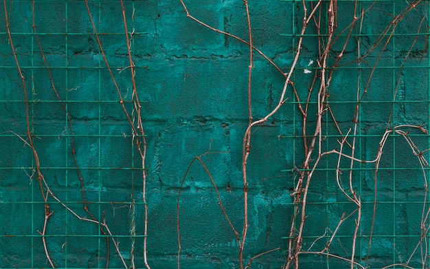 Текстура синяя стена с виноградной лозой