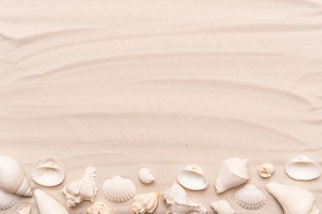 Морские раковины с белым песком. тропический фон