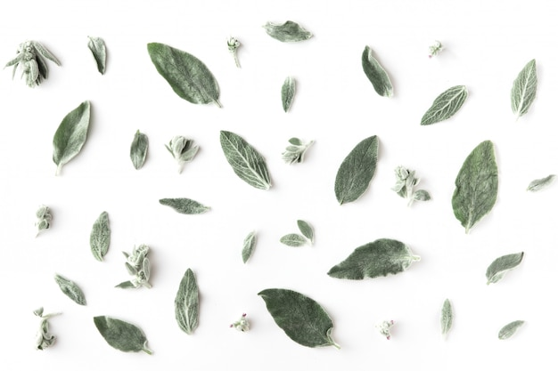 花、枝、葉、花びらの最小限のパターン