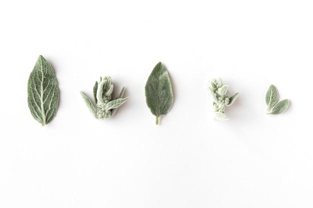 枝と葉の分離