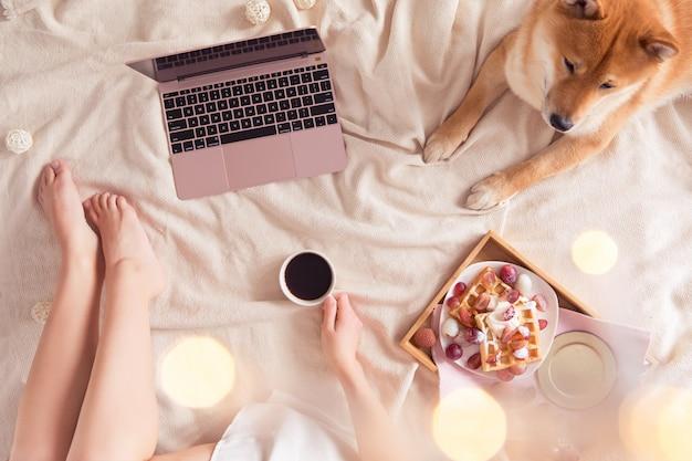ノートパソコンと犬と一緒にベッドで居心地の良い朝食