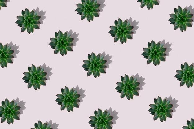 Плоский рельефный узор из зеленых суккулентов, изолированных на розовом
