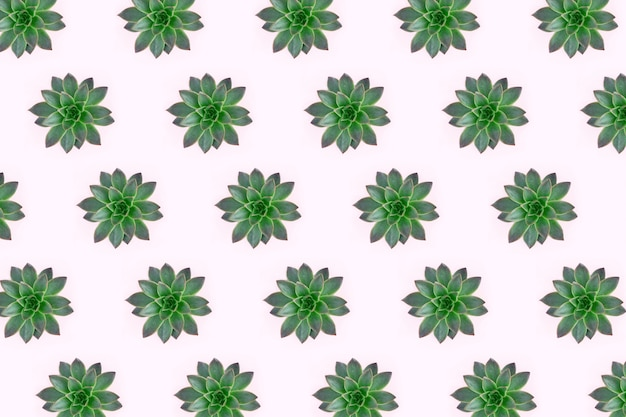 ピンクに分離された緑の多肉植物の美しいパターンのフラットレイアウト