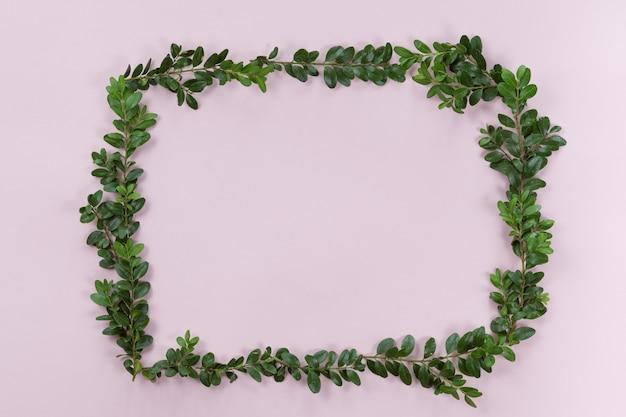 Взгляд сверху и плоское положение зеленой рамки листьев на белой розовой предпосылке.