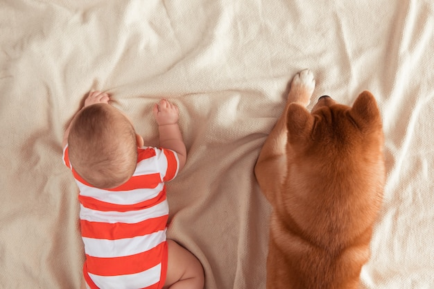 小さな男の子の隣に横たわっている芝犬の上からの眺め。