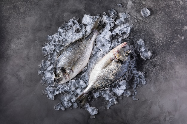 Свежая сырая рыба дорадо на льду на темном камне
