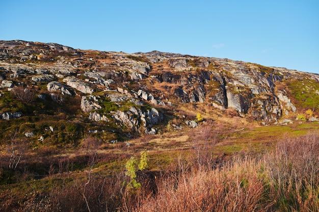 曇りの日にカラフルな秋のツンドラの木と茂みの丘の中で北部の田舎道。