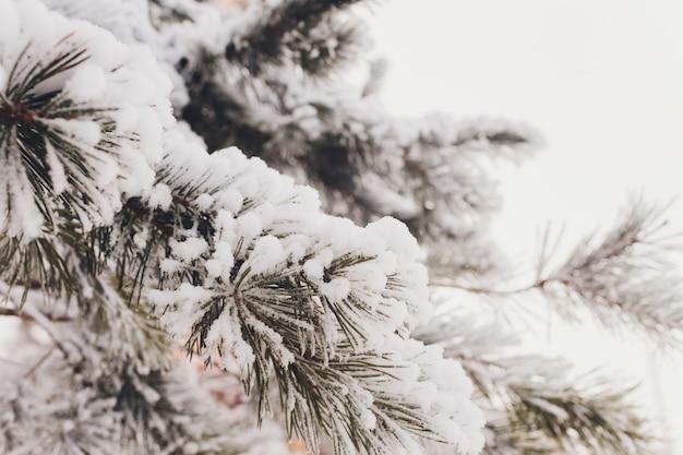 白の新鮮な雪とクリスマス常緑のトウヒの木。