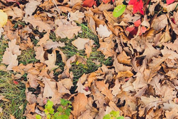 Много желтых и оранжевых сухих листьев, лежащих на земле.