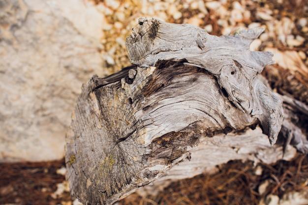 Спил дерево. кольца возле дерева.