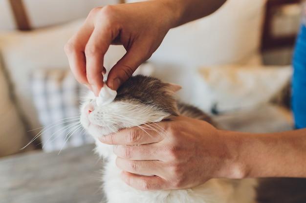 Женская рука держит ватный тампон, чтобы очистить грязь от белого кошачьего глаза