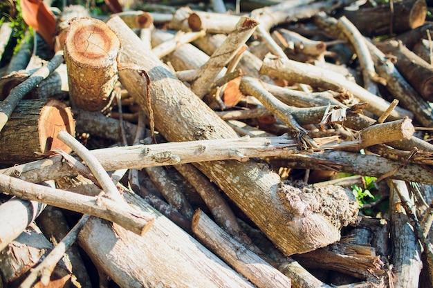 のこぎりで切った木の周りに散らばった丸太