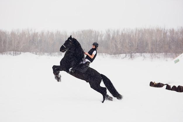 冬のフィールドで実行されているフリージアン種馬。