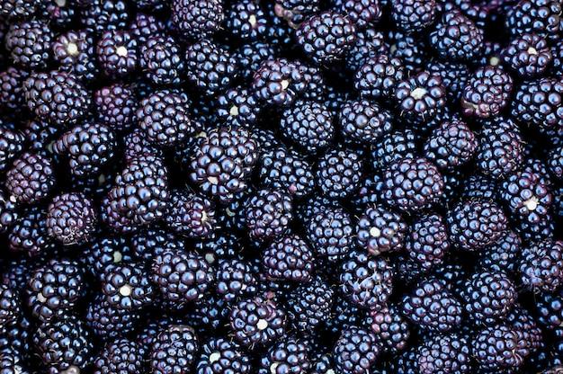 Ежевика урожай спелых лесных ягод в качестве стены