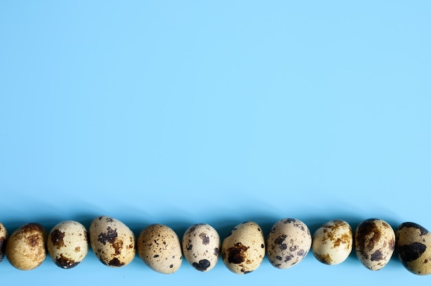 Строка перепелиных яиц на синем фоне. место для текста