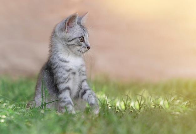 夏の緑の草の中の猫。黄色い目を持つ美しい灰色猫
