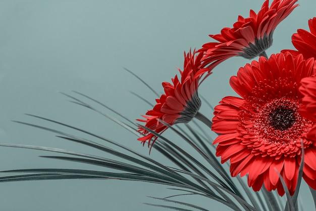 赤いガーベラの花の花束