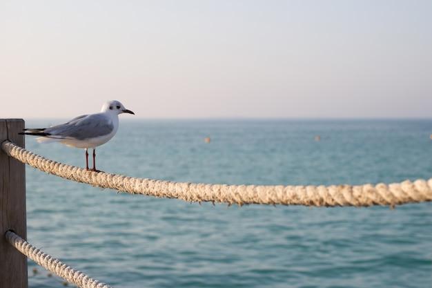 Одна чайка сидит на веревочной ограде на пляже в дубае