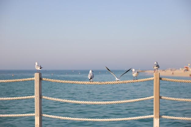 Чайки на веревочном заборе на закате пляже в дубае