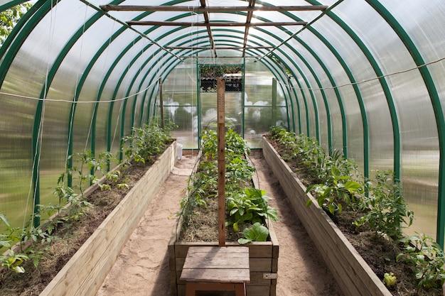 Молодые побеги овощей в теплице.