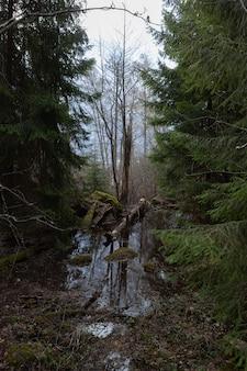 Проход между деревьями через болото к сломанному дереву.