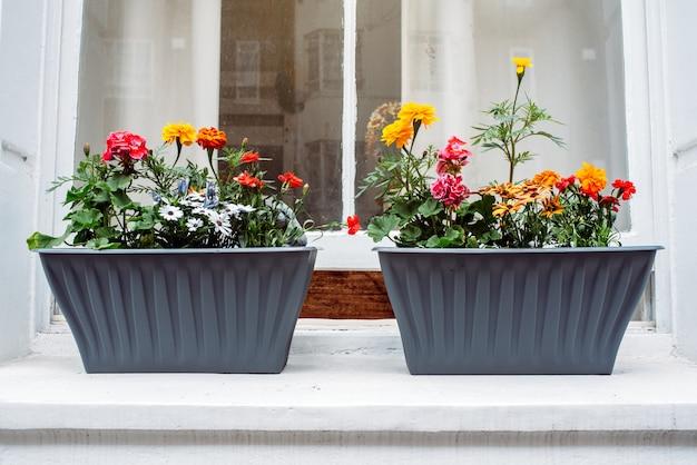 Красивые окна с цветочными горшками в белом фасаде дома