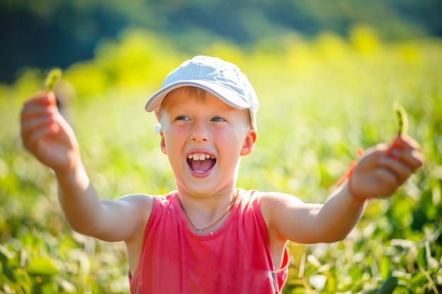 少年は大豆のさやを保持し、喜びで叫んでいます。菜食用大豆の収穫が良い。