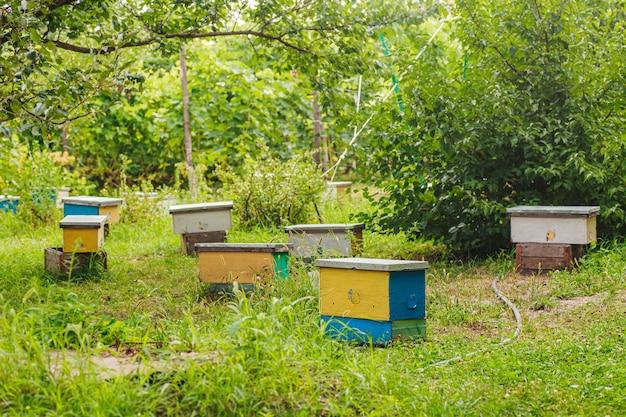 春に草の中に小さな黄色の核がたくさん。繁殖力のある繁殖の女王を持つ蜂の家族は、別々の核にいます。ミツバチの子宮を繁殖させるための小さな単一船の巣箱。