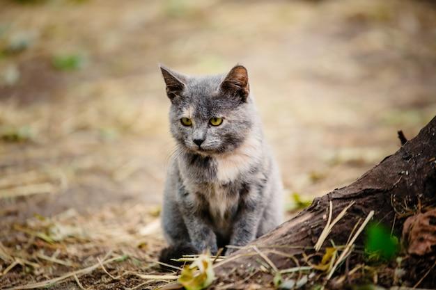 Кошка с котенком сидит на опавших листьях.