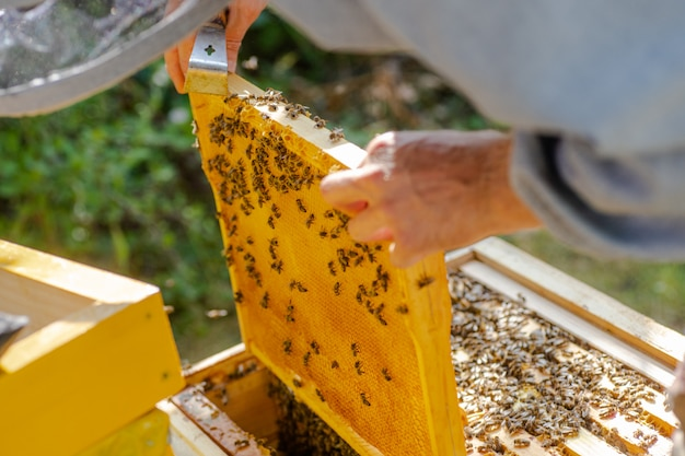 春の養蜂コンセプトの養蜂場でのミツバチ家族の検査。