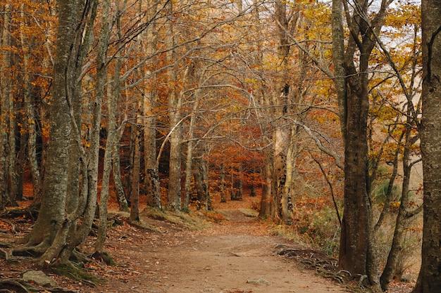 真ん中にパスがあり、地面と木に色鮮やかな葉を持つ秋の森