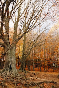 Осенний фон красочного леса с большими корнями в земле и листьями