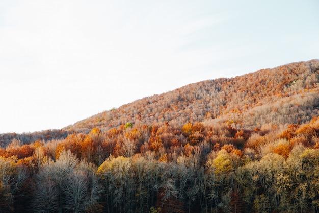 Природа пейзаж красочный лес осенью в солнечный день