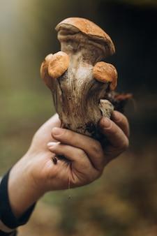 Красивый крупный план лесных грибов.