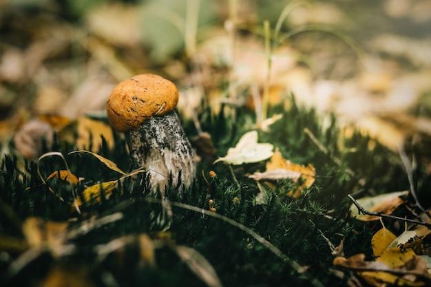森のキノコの美しいクローズアップ。