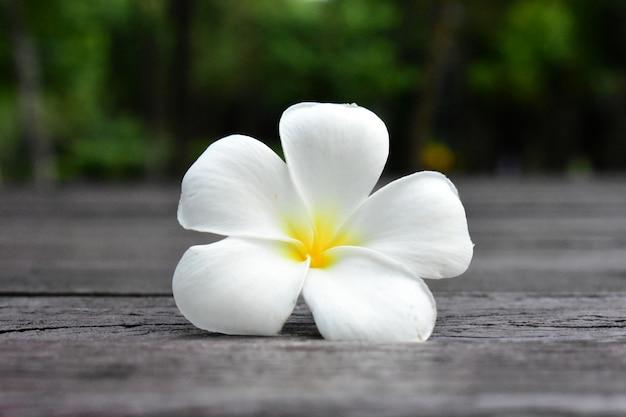 自然の背景に新鮮な美しい白い花が見えた