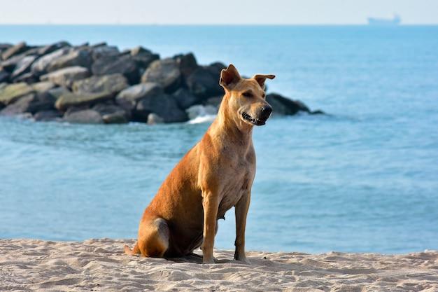 小さな犬がビーチに沿って走り、海がかわいく見えます。