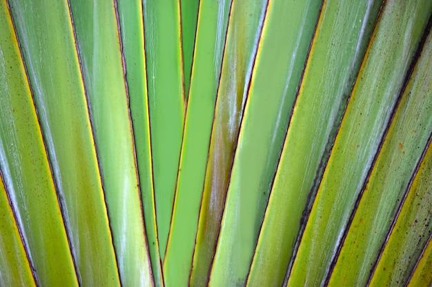 自然の緑の葉が美しく爽やかに見える