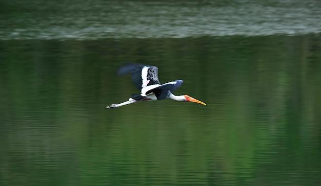 緑の川を渡って飛んでいる鳥美しいと自然
