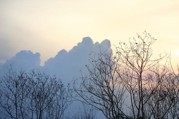 青い空を背景に乾燥した枝、