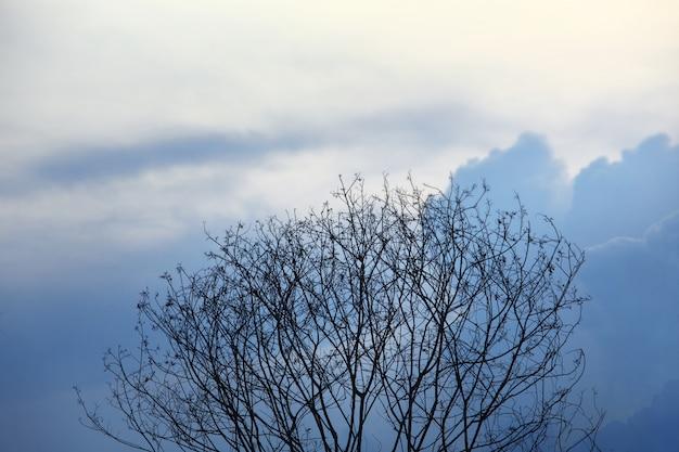 青い空に乾いた枝